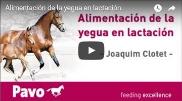 nutrición adecuada para yegua preñada